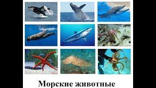Морские животные.  Обучающее видео для детей
