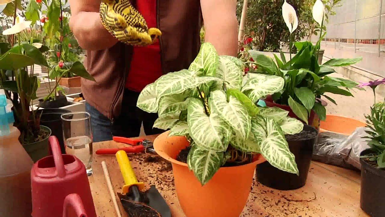 Como trasplantar una planta vivero cajica jardineros for Jardineros ltda