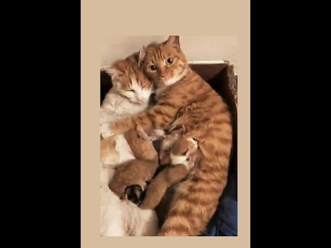 Ginger - In honor of Natl Cat Day:  whole kitten caboodle!