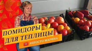 обзор томатов в теплице. Сорта и гибриды