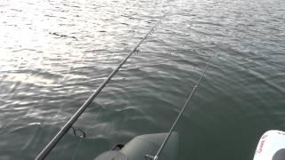 gros poisson au manié saint cassien ouverture 2013
