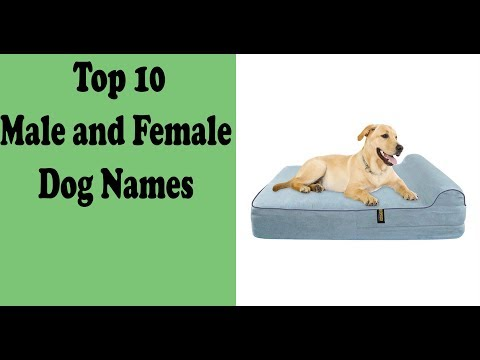top-10-male-and-female-dog-names