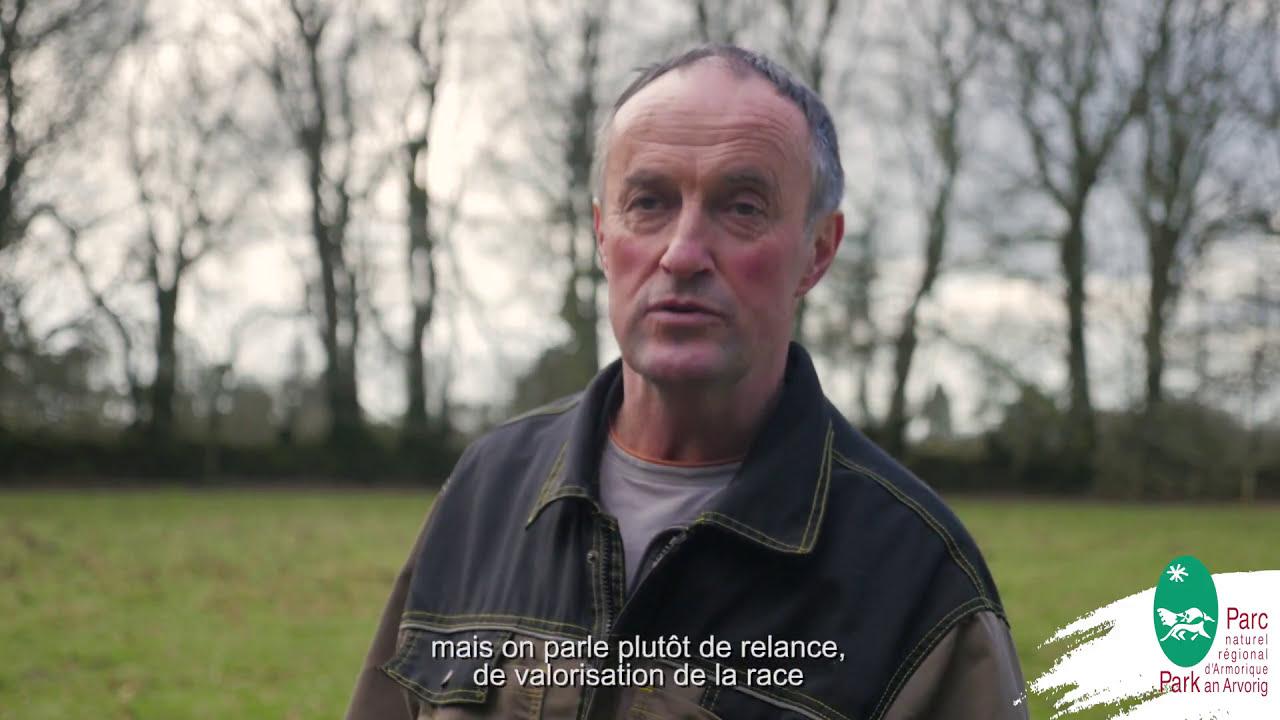 La vache Bretonne Pie Noir en Armorique - YouTube