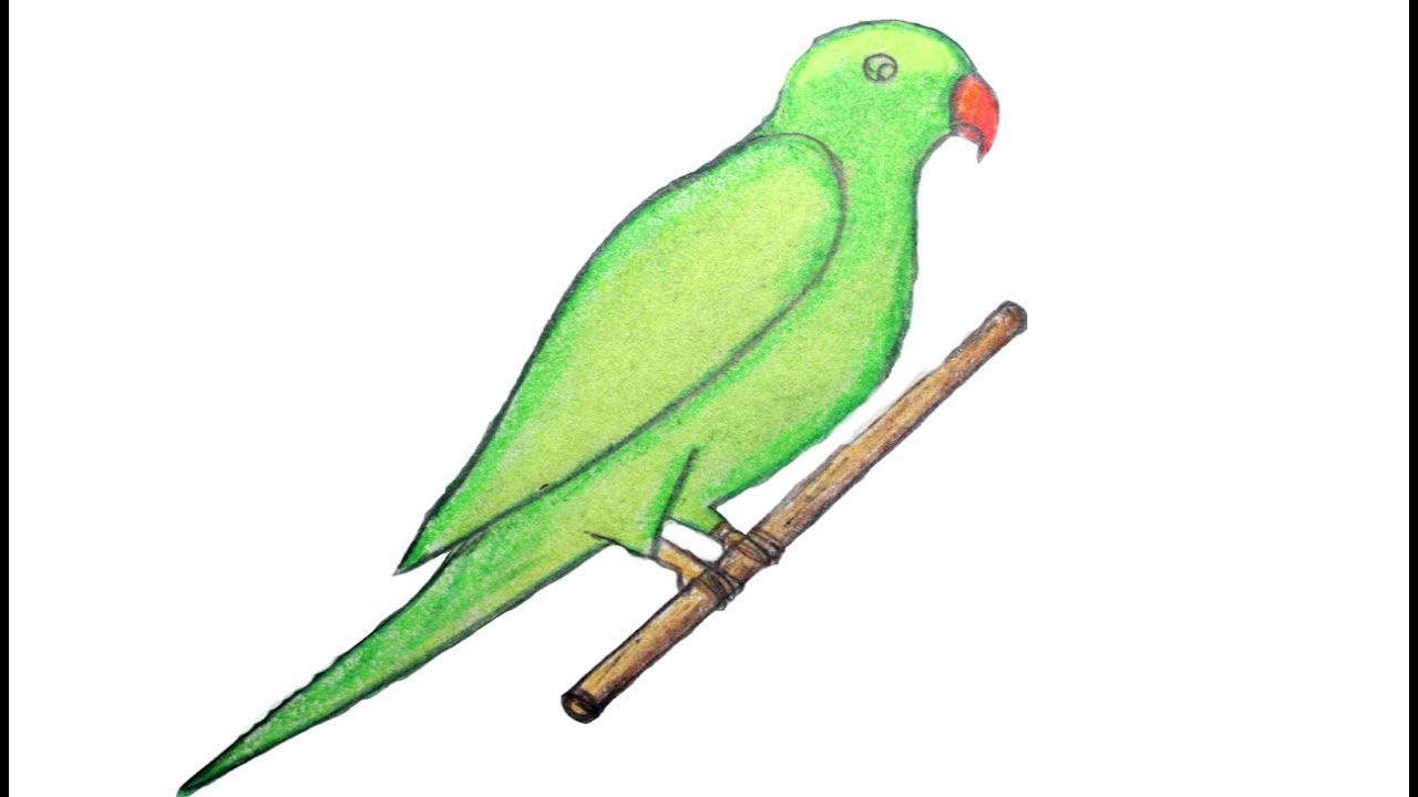 how to draw green parrot with oil pastels drawing green parrot