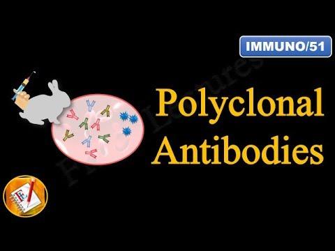 Polyclonal Antibodies (FL-Immuno/51)