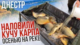 Ловля карпа на реке Днестр ПОЗДНЕЙ ОСЕНЬЮ по холодной воде