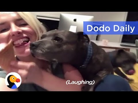 Funny Pit Bulls Try To Steal Mom