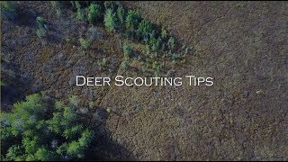 Tips for Deer Scouting Public Land