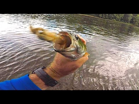 Stream Smallies And Trout In WV!