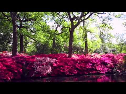 Isabella Plantation - Richmond Park - #HiddenLondon