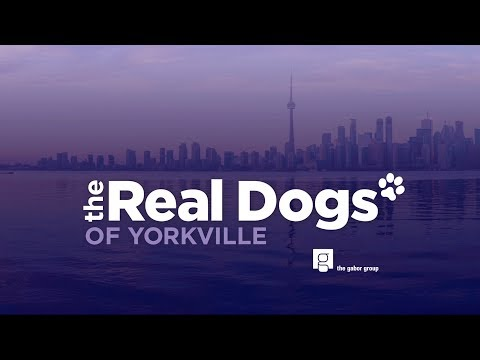 Real Dogs of Yorkville Season 1 Episode 1