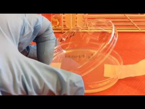 Bio 440 General Microbiology Lab: Chapter 2 Media & Equipment