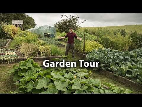late-july-tour-of-our-100%-organic-kitchen-garden-(only-feed-is-compost)