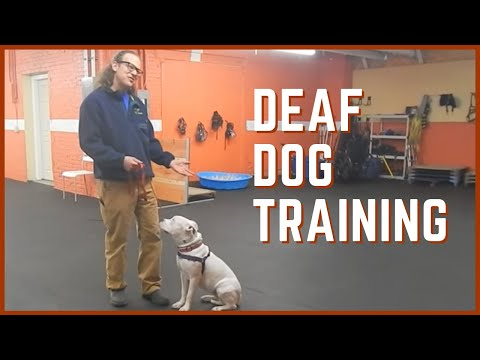 Deaf Dog Training
