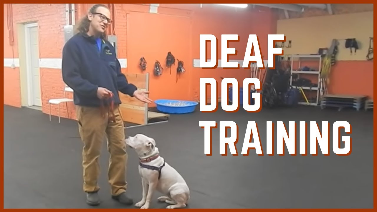 Deaf Dog Training Youtube