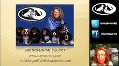 Reading Pet Food Labels with Dr. Morgan-Webinar 1