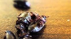 Marco Island Pest Control Company