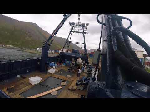 saga salmon tendering