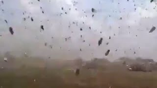 EPIC: Man fights back lockust swarm with a slipper
