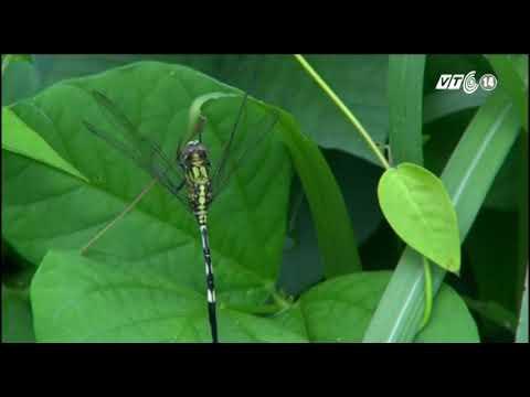 Videos bảo tồn thiên nhiên