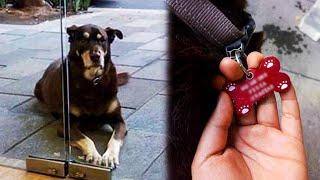 Девушка хотела покормить бездомную собаку пиццей, пока не прочитала надпись на ошейнике