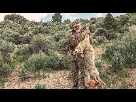 Colorado Coyote Management