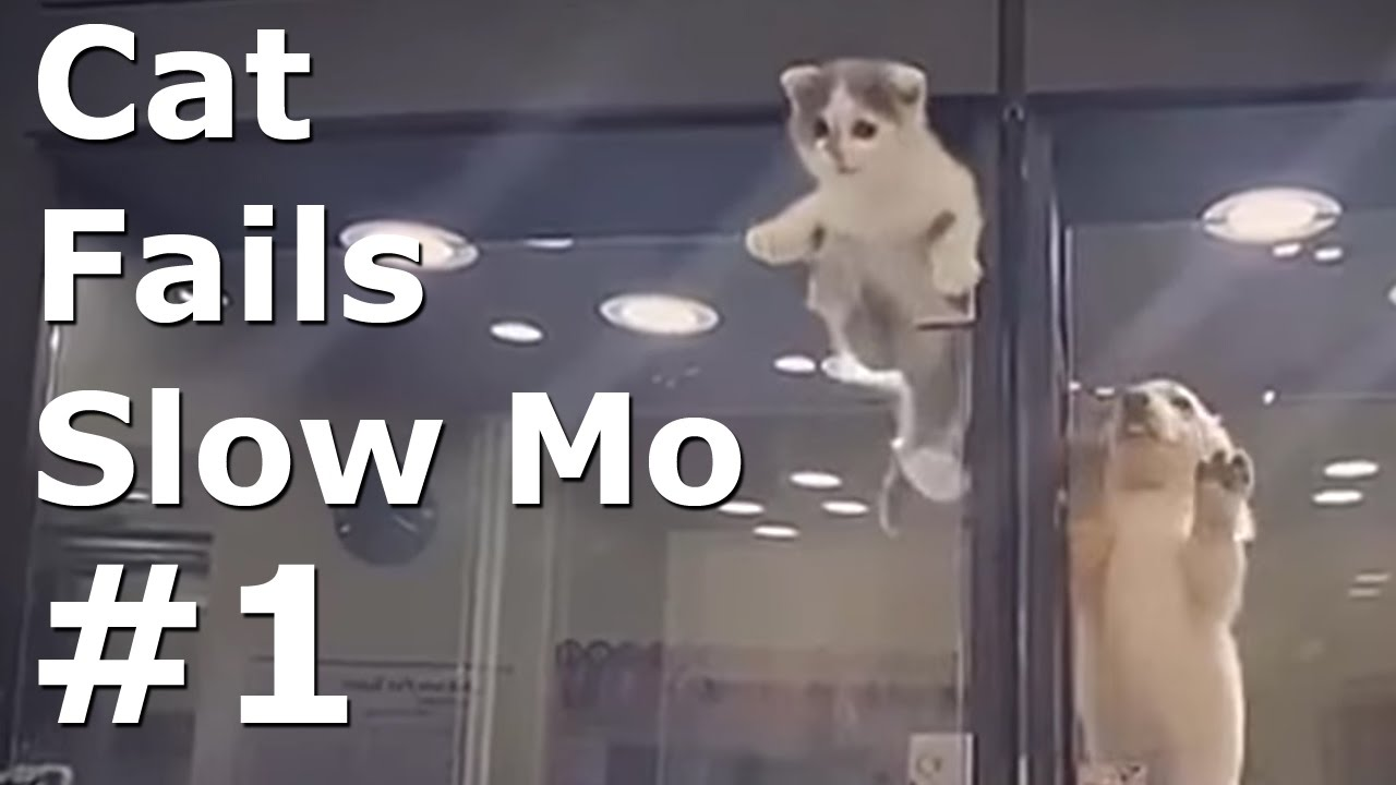 FUNNY Cat Fails 2017 #1 in Slow Motion Funny Cats Video Compilation