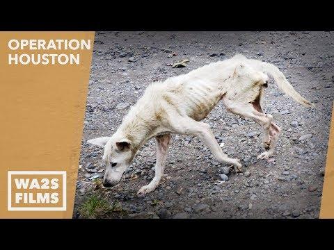 Hope For Paws: Rescue 2 Starving Homeless Street Dogs Named Salt & Pepper - AMAZING!