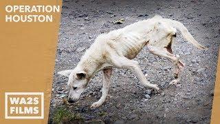 Forgotten Dog Rescuers Save 2 Starving Homeless Street Dogs - Howl & Hope For Dodo Dogs
