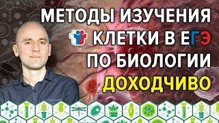 46. Методы изучения клетки в ЕГЭ по биологии доходчиво