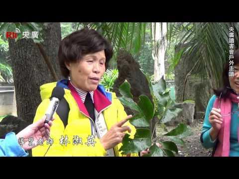 前庭(上)・介紹水黃皮、江某(鵝掌柴)│央廣散散步《旅行&文化》