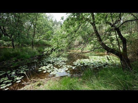 Les lagunes, le trésor caché de la forêt landaise