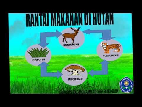 media pembelajaran rantai makanan universitas muhammadiyah sukabumi