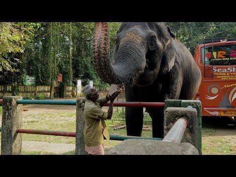 Must See!!! India: Elephant Orphanage Kerala