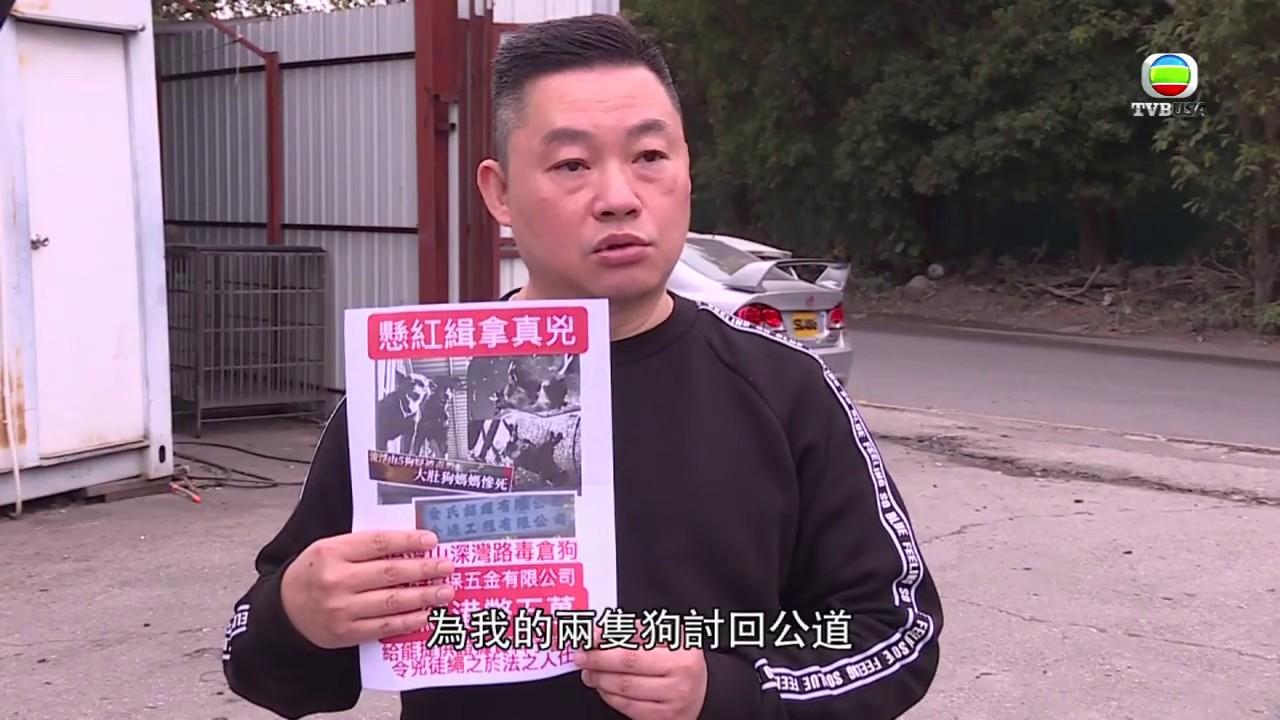 《東張西望》流浮山五狗連環毒殺案 懸紅五萬緝兇 - YouTube