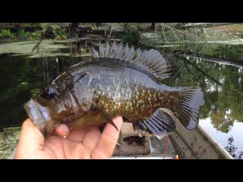 Warmouth Fishing June 2019