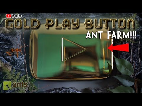 MY YOUTUBE GOLD PLAY BUTTON ANT FARM!
