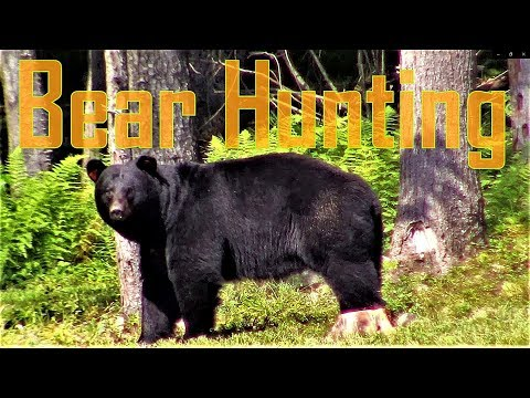 New York Black Bear Hunting Pre-Season!