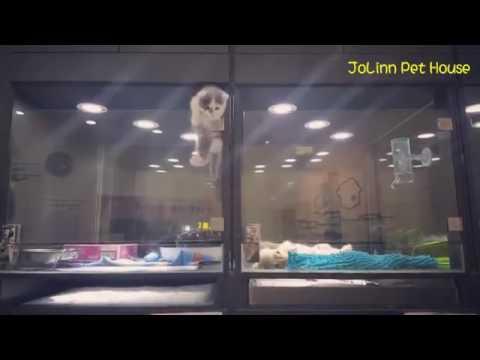 Cute Kitten Escapes Cage to Play With Puppy (Gatinho sai de gaiola e vai  onde filhote de cachorro)
