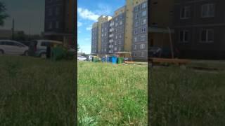 Под Гродно на детской площадке застрелили собаку (Скидель)