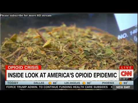 CNN Kratom Report With Sanjay Gupta; Possible Opiod Treatment