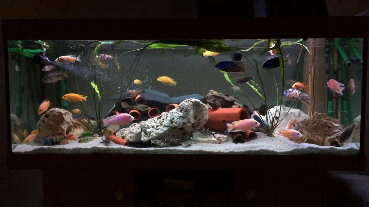 malawi aquarium mit led beleuchtung youtube. Black Bedroom Furniture Sets. Home Design Ideas