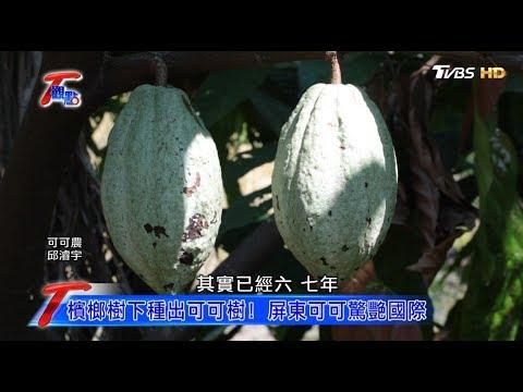 屏東農業寧靜革命 可可黑金億萬商機 T觀點 20181103(1/4)