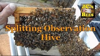 Splitting Observation Hive