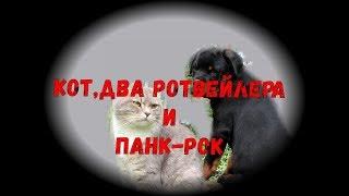 ДВА РОТВЕЙЛЕРА,КОТ И ПАНКИ.воспитание и дрессировка собак