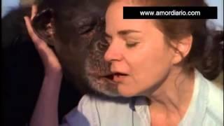 Conoce El Reencuentro De Tres Chimpancés Y Su Dueña 18 Años Después