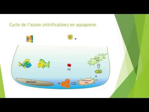 Comprendre le cycle de l'azote en 2 minutes
