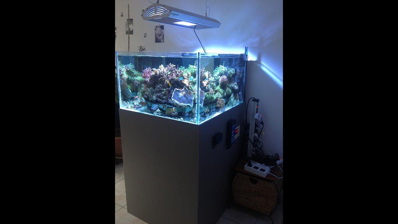 aquarium r 233 cifal eau de mer 280 l reef tank 75 g 6 mois