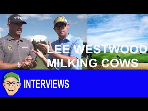 Lee Westwood Milking Cows