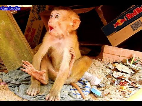 Breaking Heart & Pity Abandoned Baby Monkey | Adorable Abandoned now in Good Condition.